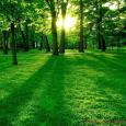 Mano miestas – Pagėgiai žali